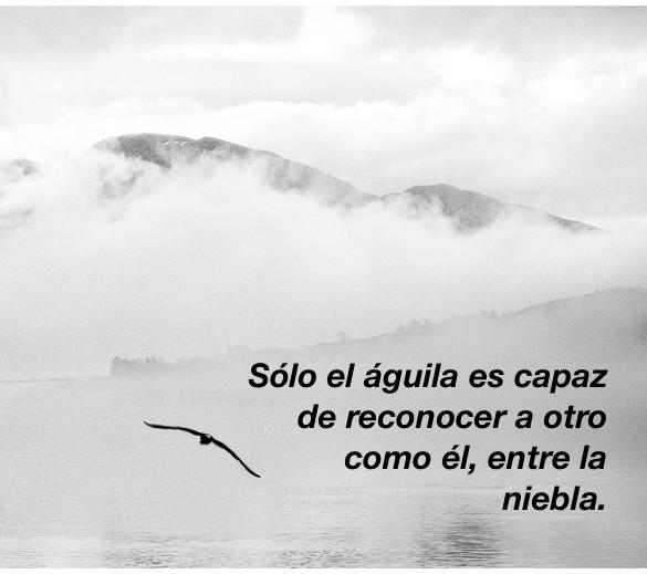 El águila y la niebla