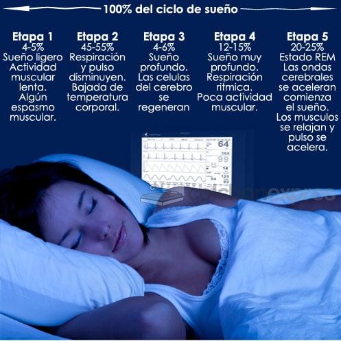 Fases del ciclo del sueño