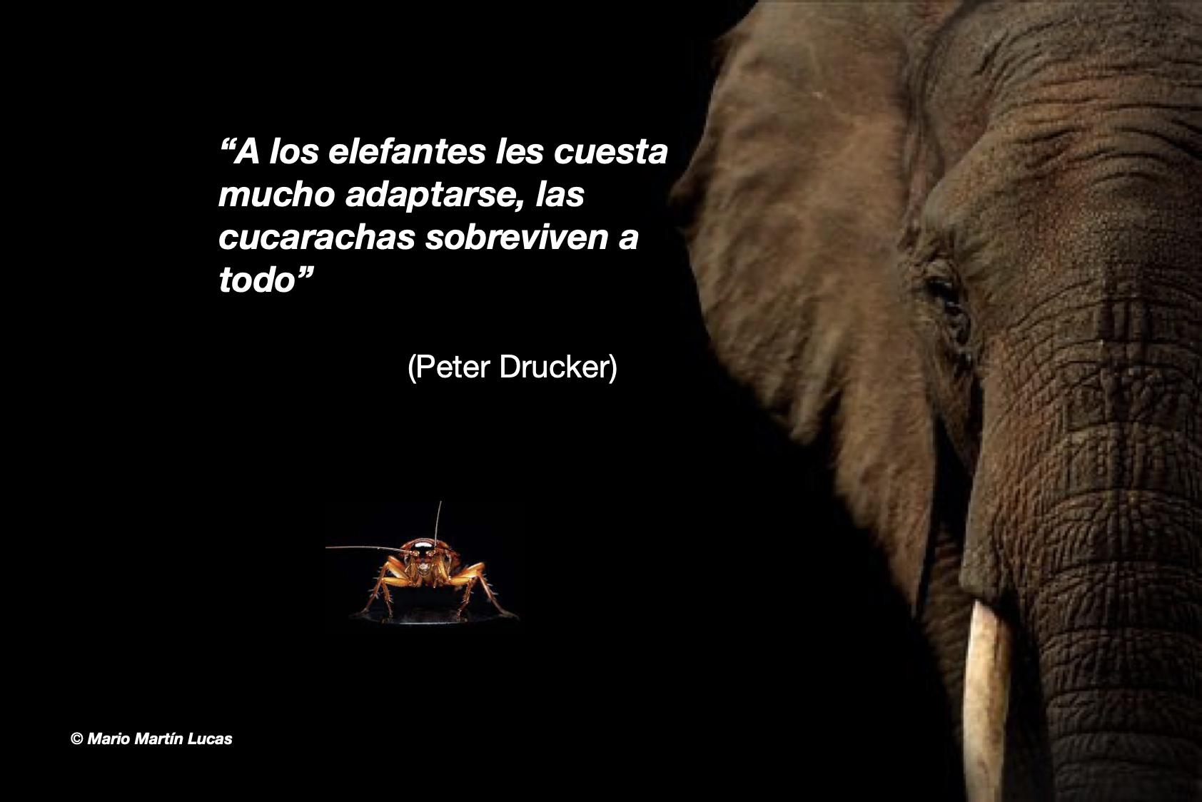Elefantes y cucarachas